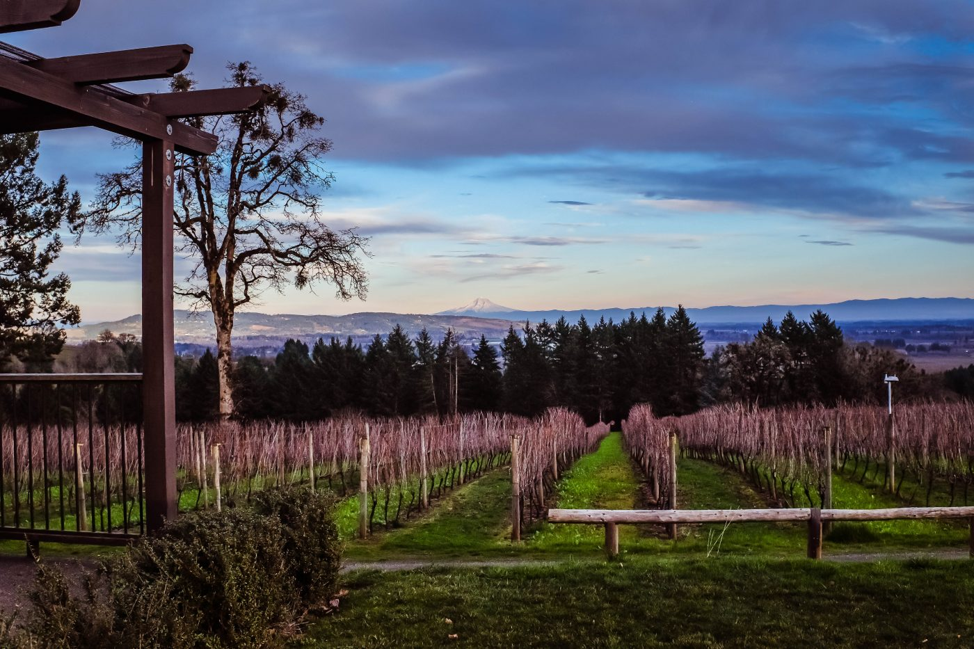 Views of the vineyards in the Willamette Valley